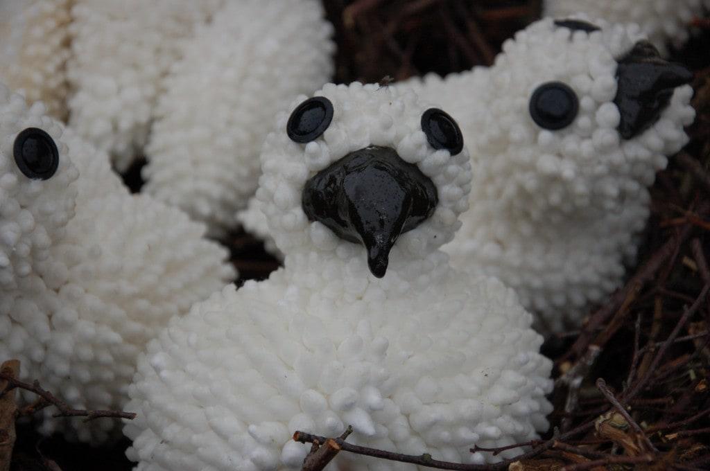Kuiken uit het nest - Niet te Koop